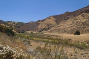 Cuyama River Watershed
