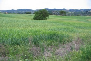 Lower Salinas - Paso Robles Creek Area Watershed